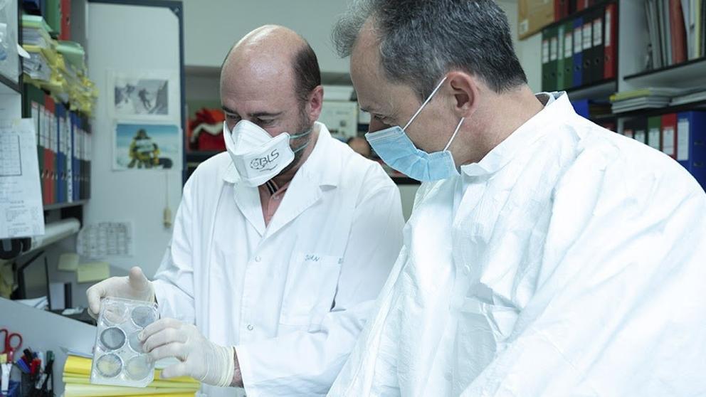 EuropaPress 2975779 investigadores cnb ensayaran animales candidato vacuna frente covid proxima 20200501150527 415 k8tH U488856970187LC 992x558@LaVanguardia Web
